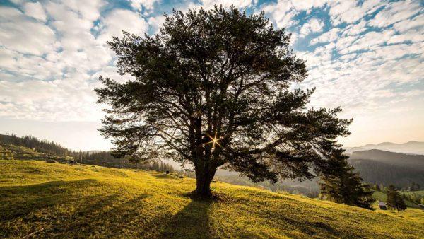 image : epnll-auto-hypnose-guidée-audio-mp3-l-arbre-renforcement-de-estime-de-soi-ecole-de-pnl-de-lausanne